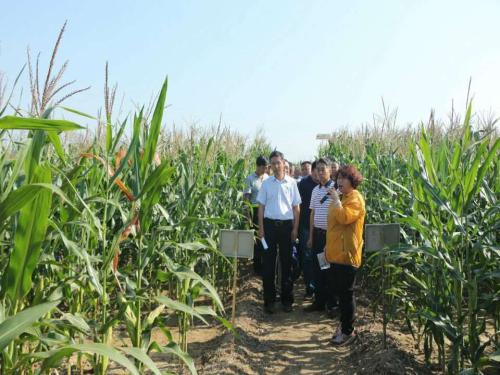 临潼区农技中心绿色高产高效创建项目