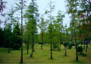 西安渭北临潼现代工业组团绿化养护项目