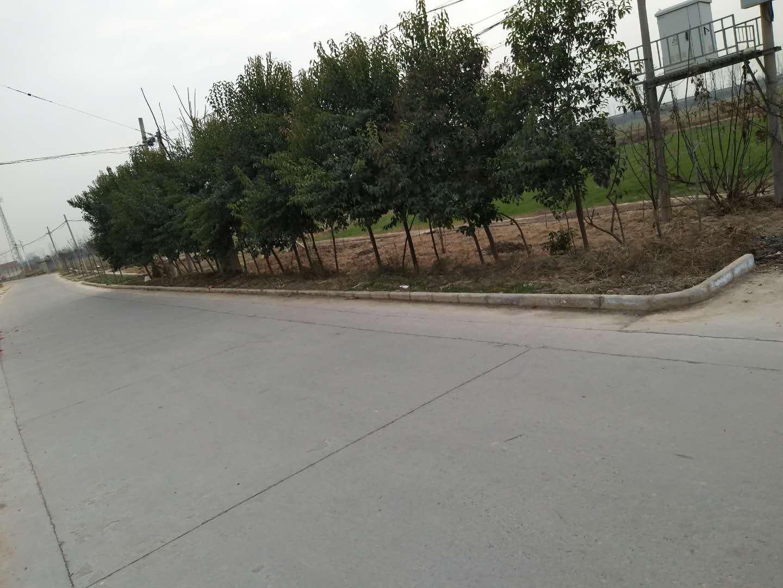 富平县宫里镇街道改造项目