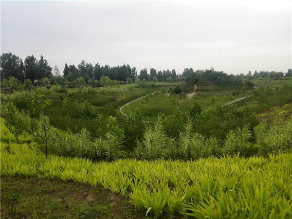 兴平市2018年国家农业综合开发阜寨镇土地治理高标准农田建设项目