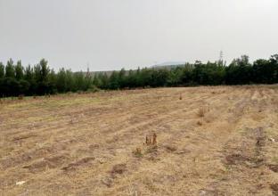 绥德县张家砭镇郝家桥村土地整治项目工程预算审计