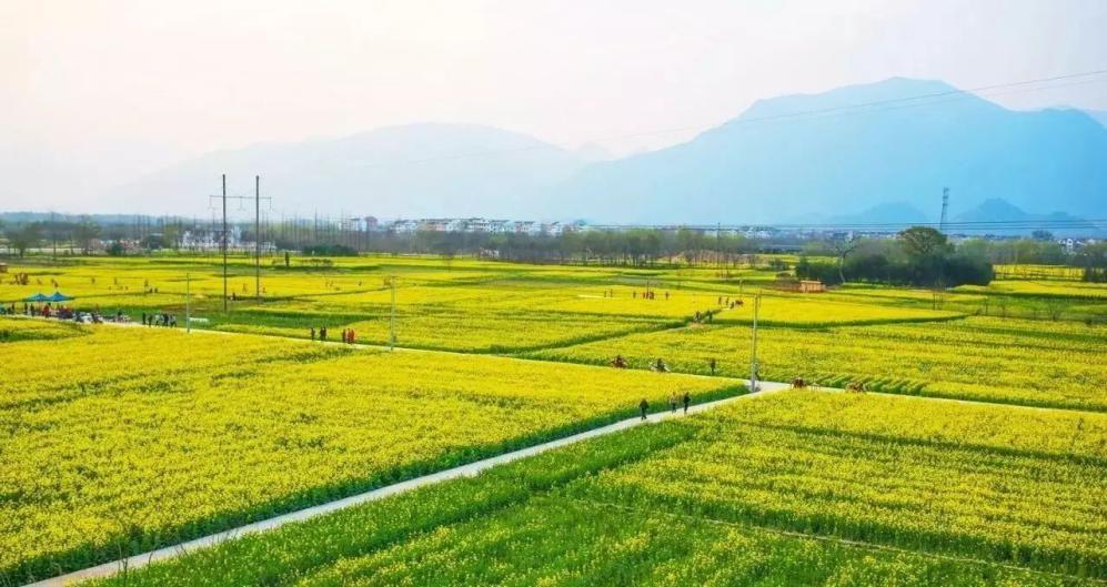 2015年定安县定城镇桐卷埇冬季瓜菜基地菜田改造项目