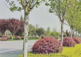 锦业二路、锦园三路道路工程造价咨询服务费采购项目